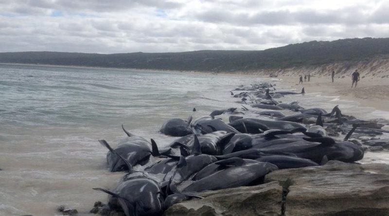whales die australia 2018