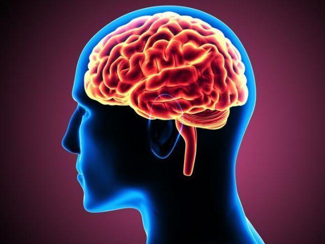 brain circuit control alcohol cravings